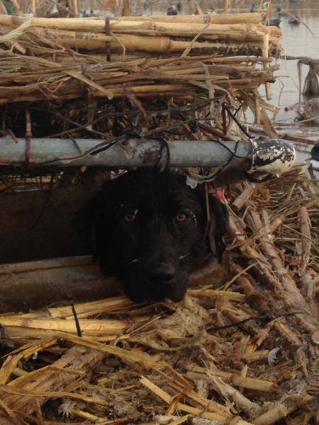 jan 14 2015 dog2